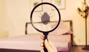 Bug Off How to Protect Your Home from Bed Bugs