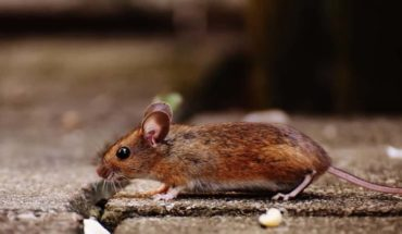 5 Key Questions You Should Ask Before Hiring a Pest Control Company